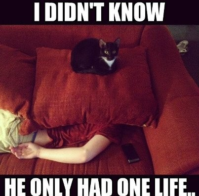 Cat 9 lives image
